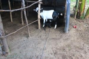 Uncle A's Farm