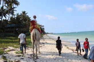 Camel riding at Nyali beach